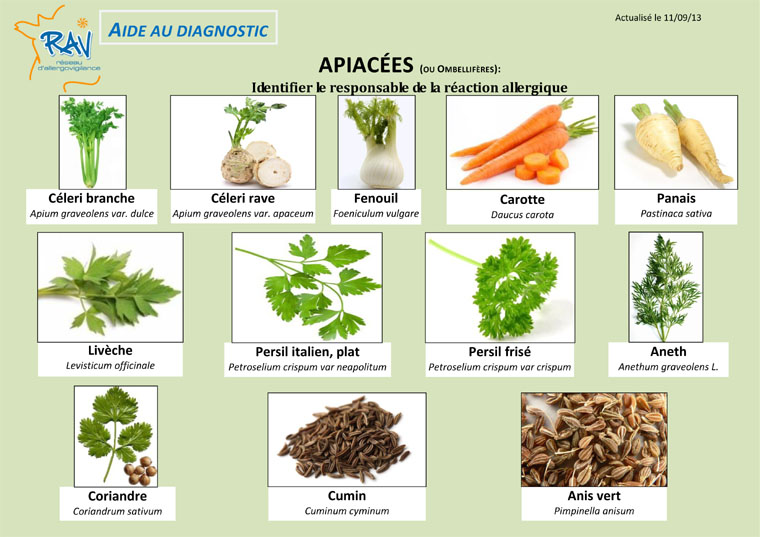Aide au diagnostic - Apiacees1